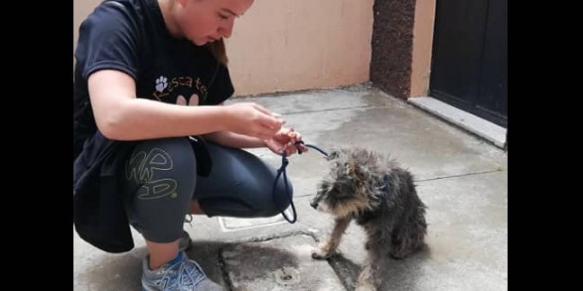 Refugio pide apoyo para mascotas rescatadas en medio de la crisis por Coronavirus