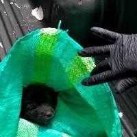 ¡No son basura! Rescatan a cuatro cachorros dentro de un costal en Martha Bucaram, sur de Quito