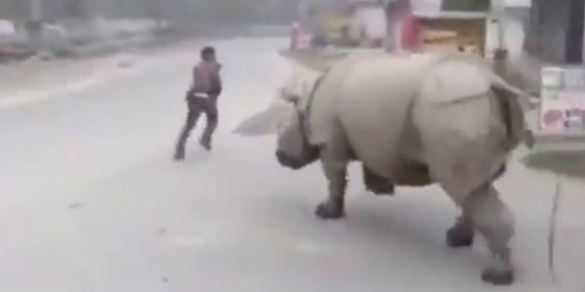 VÍDEO: Rinoceronte 'reforça quarentena contra o coronavírus' atacando em ruas desertas