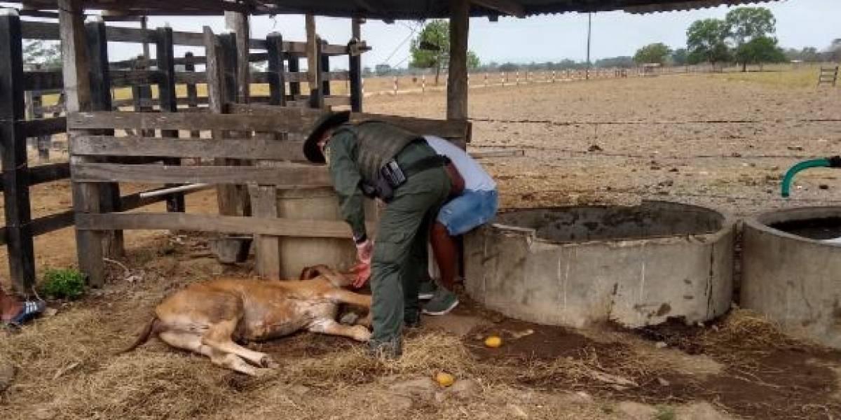 Jugador de la Selección Colombia denunció que varios sujetos violaron una de sus vacas