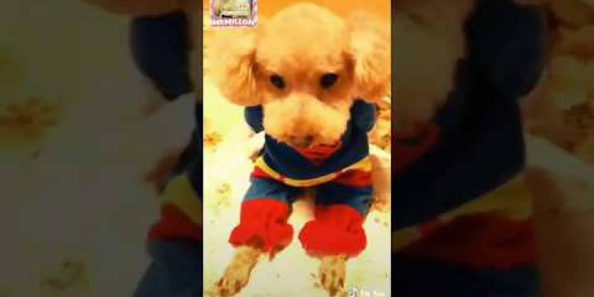 """Mi mami, mi papi, me compran mis cosas"": mascotas de Tik Tok consentidas"