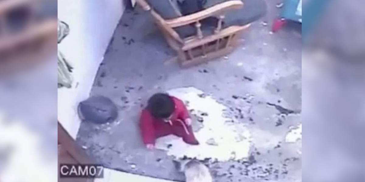 Vídeo que mostra gata salvando bebê que fugiu do berço de cair  de escada faz sucesso nas redes sociais