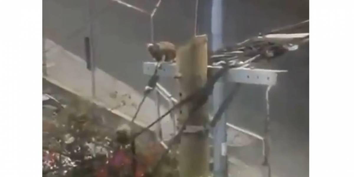 Video: Monos titís disfrutan de la libertad y se pasean por las calles gracias a la cuarentena