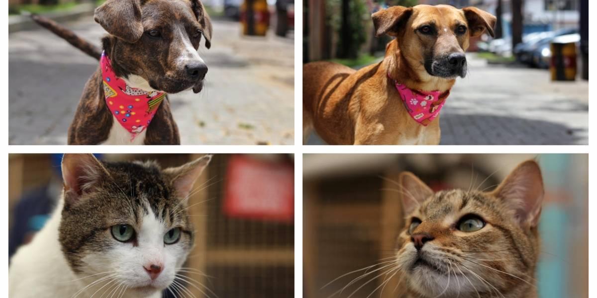 Así puede adoptar un perro o gato durante la cuarentena en Bogotá