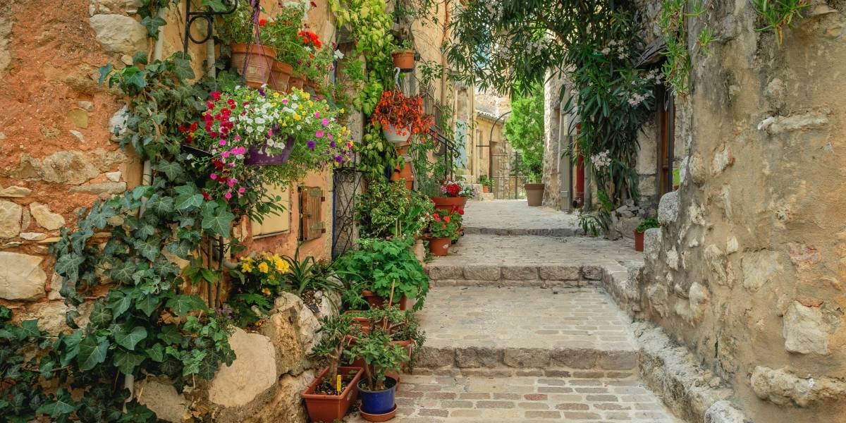 Jardins verticais: solução perfeita para levar um pouco de natureza para dentro de casa