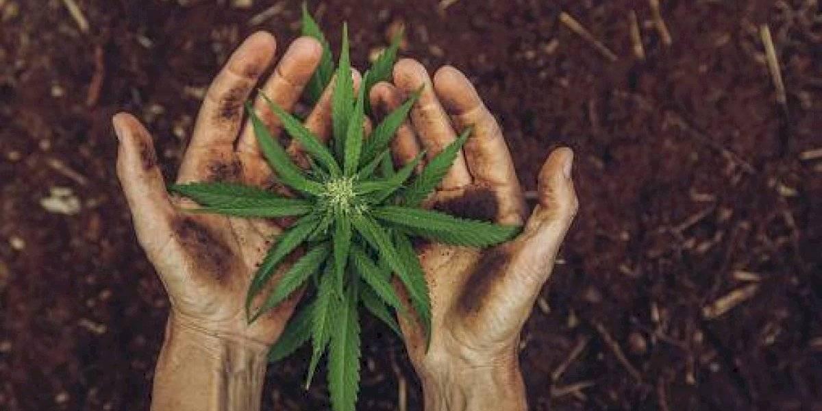 ¿Por ésta razón se celebra el 4/20, Día internacional de la Marihuana?