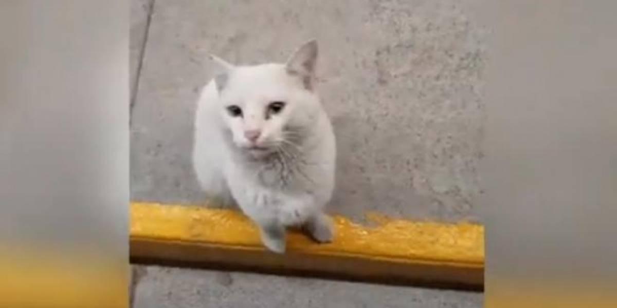 Vídeo revela golpe de gato que acompanha pessoas ao supermercado e mostra a comida que quer que elas comprem