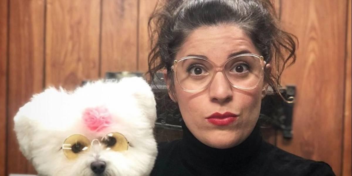 """El nuevo servicio de streaming HBO Max anuncia """"Hot Dog"""", un nuevo reality show de peluquería canina"""