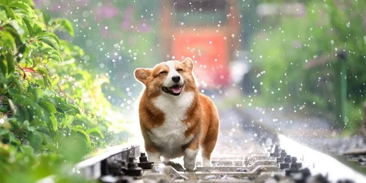 ¡Atentos! Este es el significado de soñar con perros