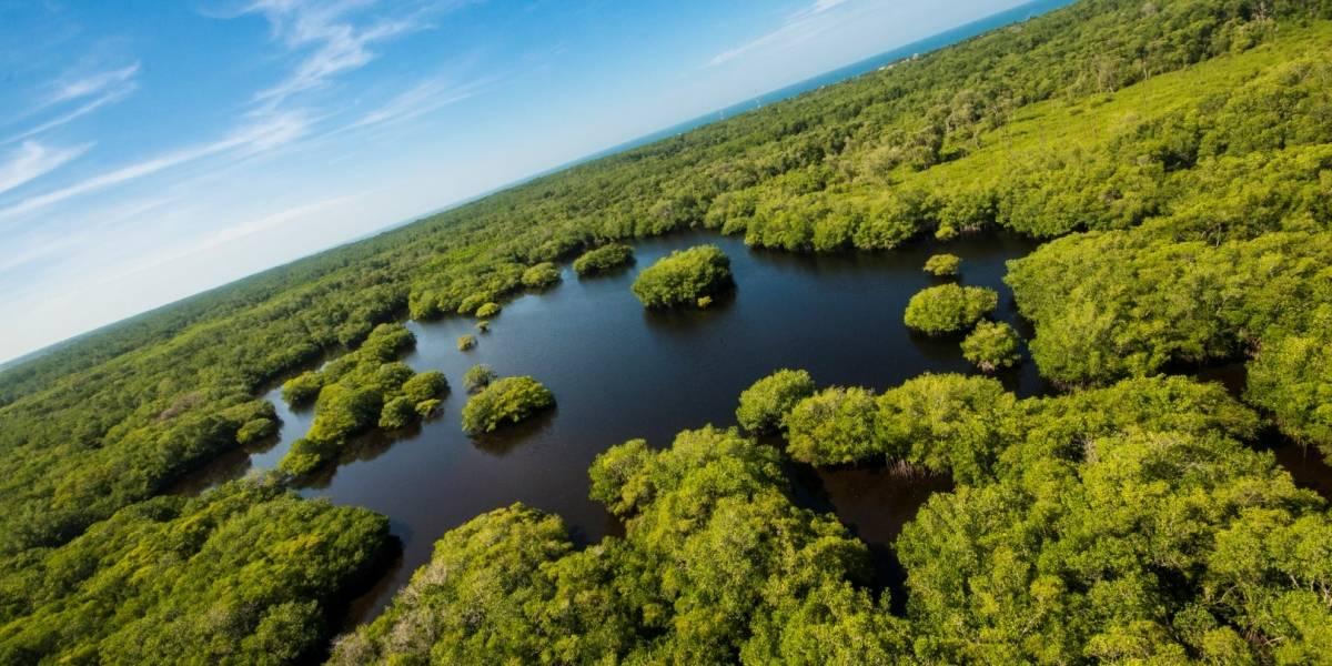 Día de la Tierra: Así puedes cuidar al planeta desde el confinamiento