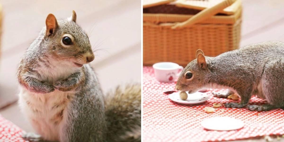 Fotógrafa faz sessão de imagens com esquilo fazendo piquenique; veja as fotos
