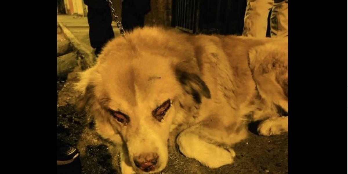 Tras denuncias, albergue logra decomisar perro con grave enfermedad en los ojos