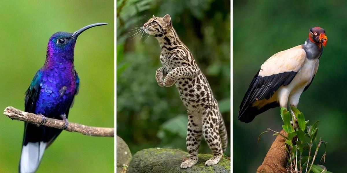 10 incríveis animais selvagens da Costa Rica