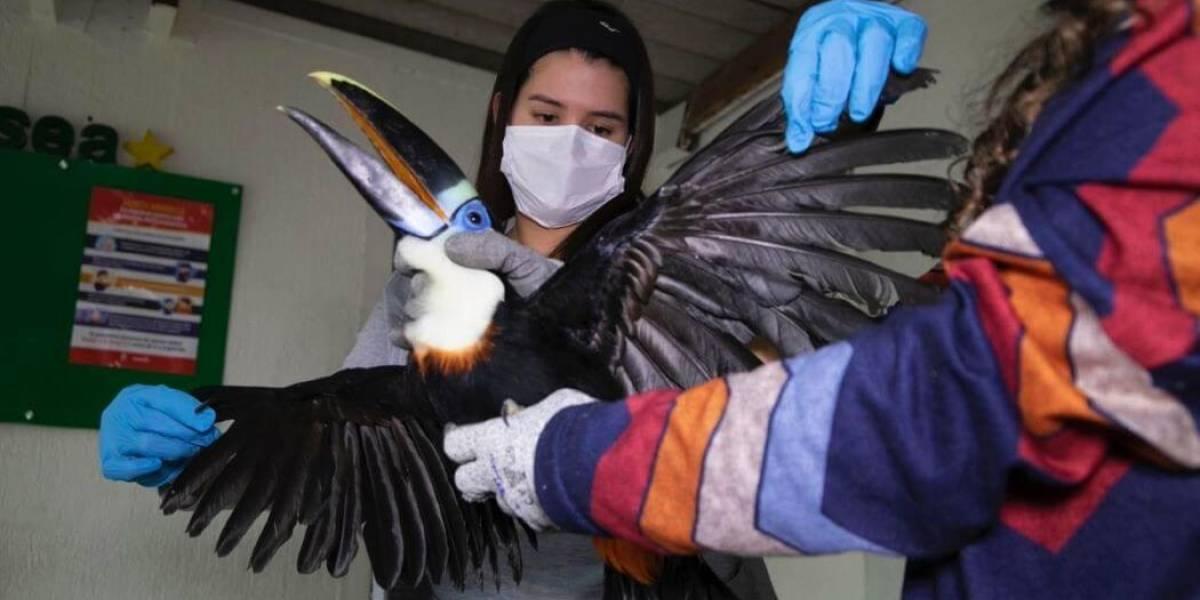 Rescatan aves silvestres que tenían como mascotas en Bogotá
