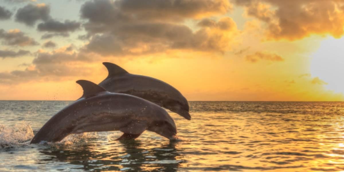 Por cuarentena, graban a delfines 'luminosos' en playa de California
