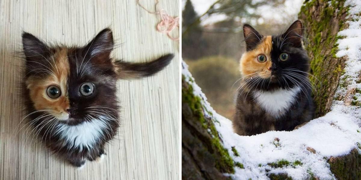 Conheça Yana, a gatinha com 'duas caras'