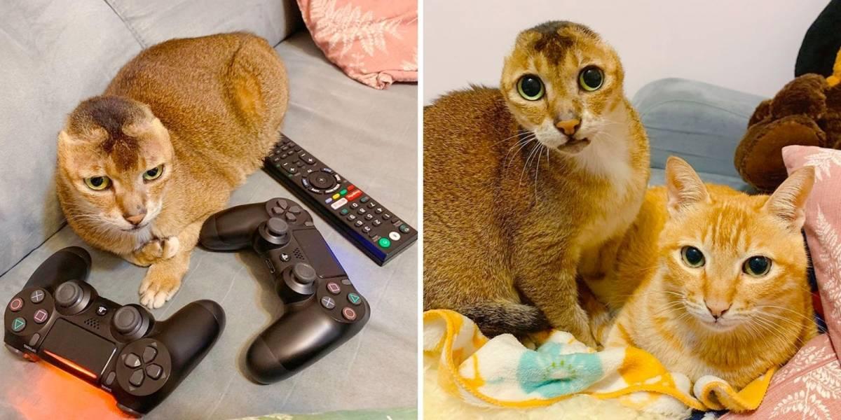 Este gatinho perdeu suas orelhas, mas ganhou um melhor amigo; veja fotos