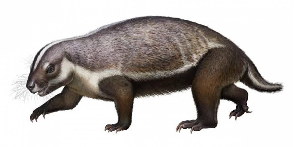 """Descubren fósiles de la """"bestia loca"""", un extraño animal de 66 millones de años"""