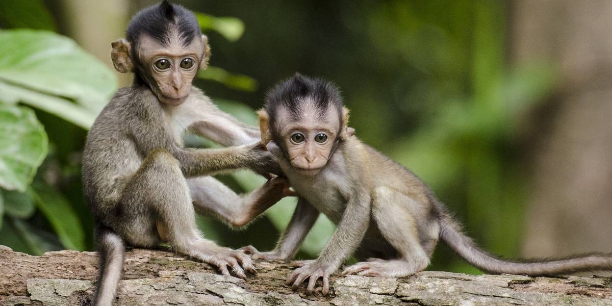 La impresionante foto viral de los monos respetando el distanciamiento social