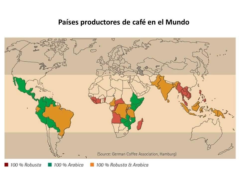 Productores de café