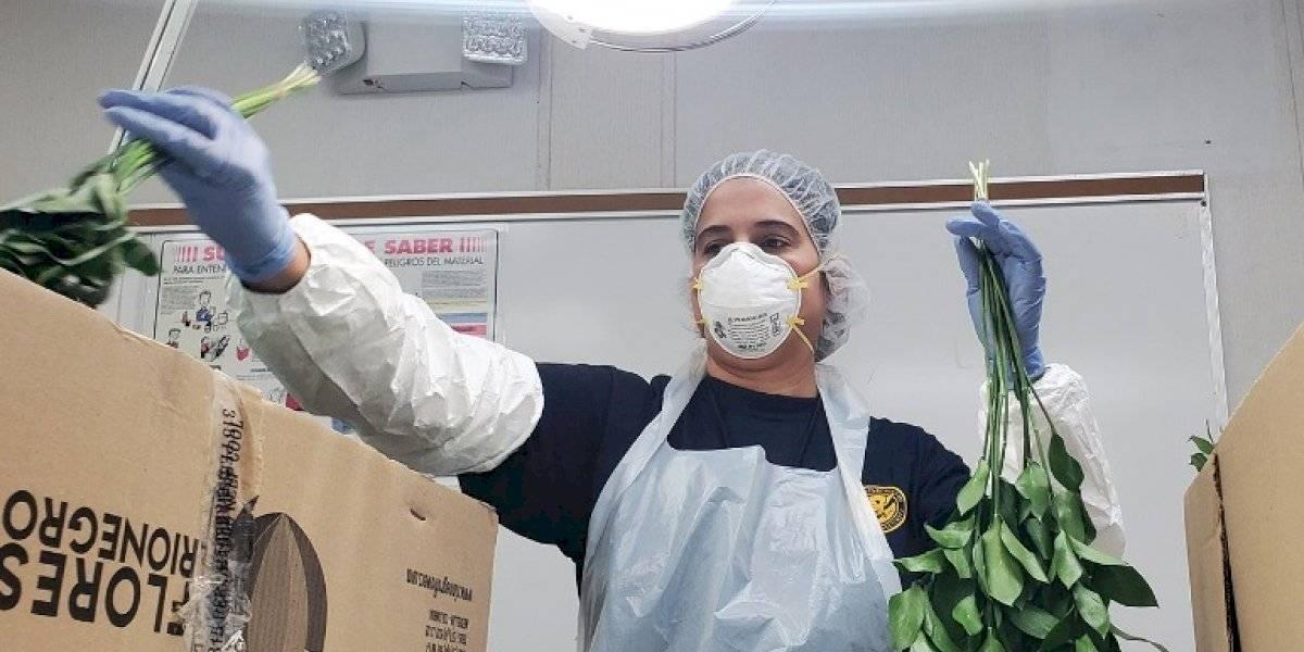 Inspeccionan flores cortadas en primer vuelo fantasma que llega a San Juan