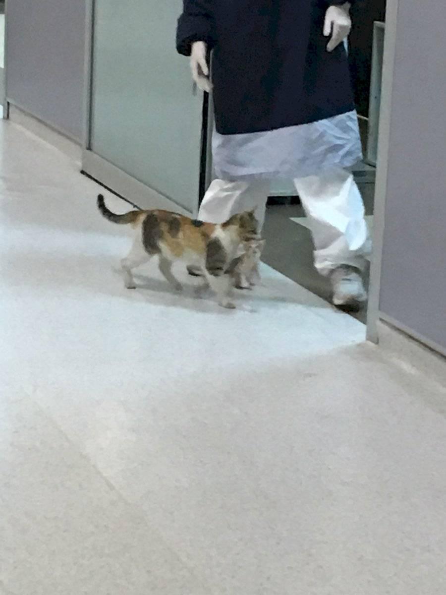 Gatita desesperada acudió a un hospital para que salven a su bebé Twitter