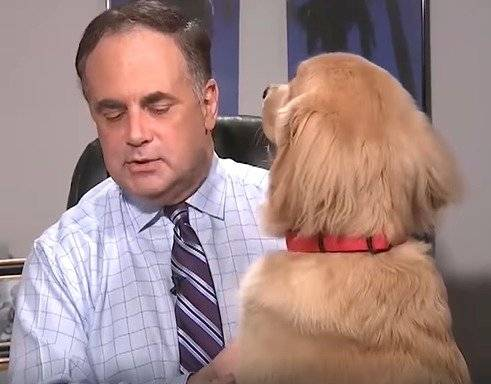 perro viral
