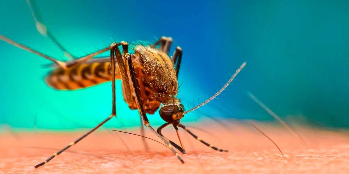 Malaria: descubren microbio que puede frenar por completo contagio de enfermedad