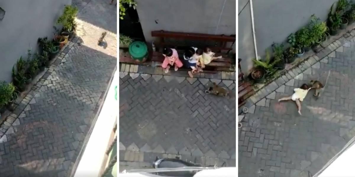 Macaco anda de moto pela rua e desce do veículo para sequestrar uma criança; confira o vídeo