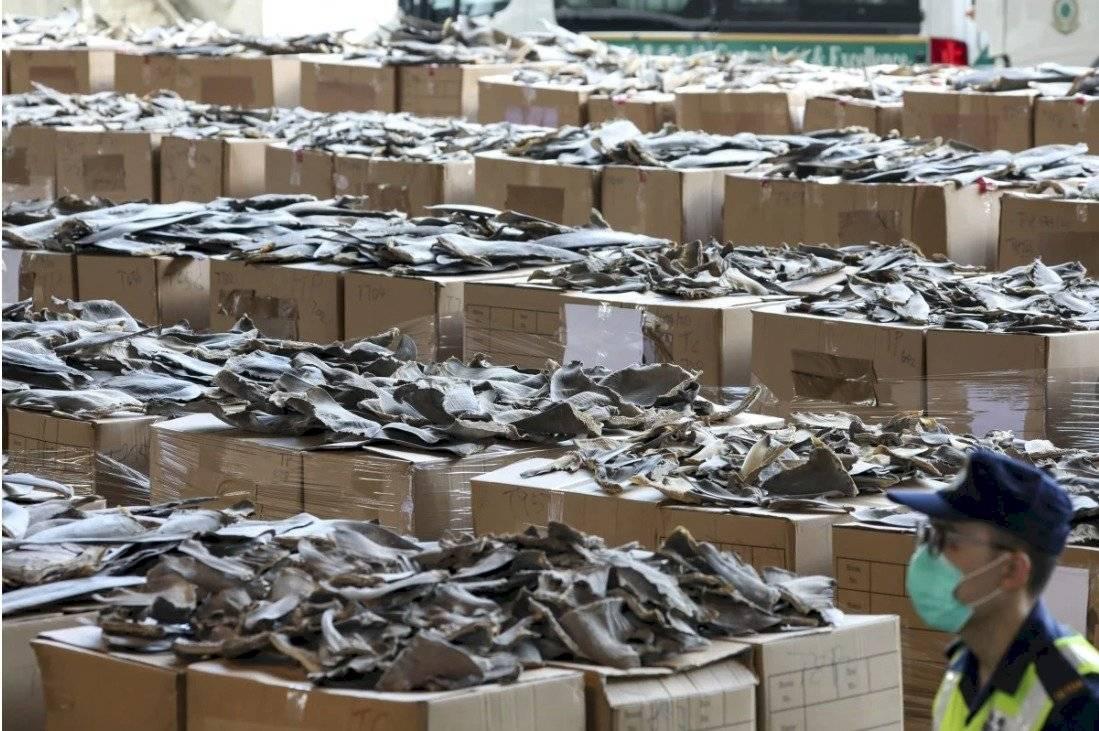Hong Kong decomisó 26 toneladas de aletas de tiburón provenientes de Ecuador South China Morning Post
