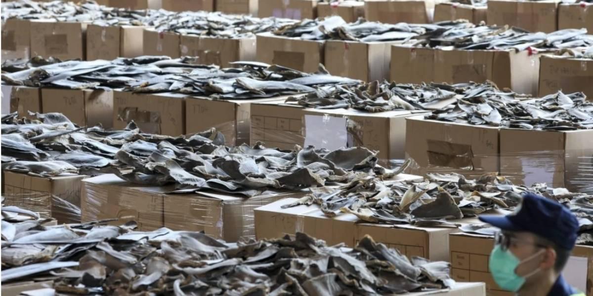 Hong Kong decomisó 26 toneladas de aletas de tiburón provenientes de Ecuador