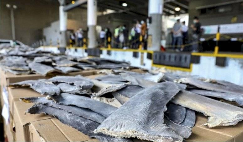 26 toneladas de aletas de tiburón South China Morning Post