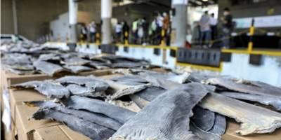 26 toneladas de aletas de tiburón