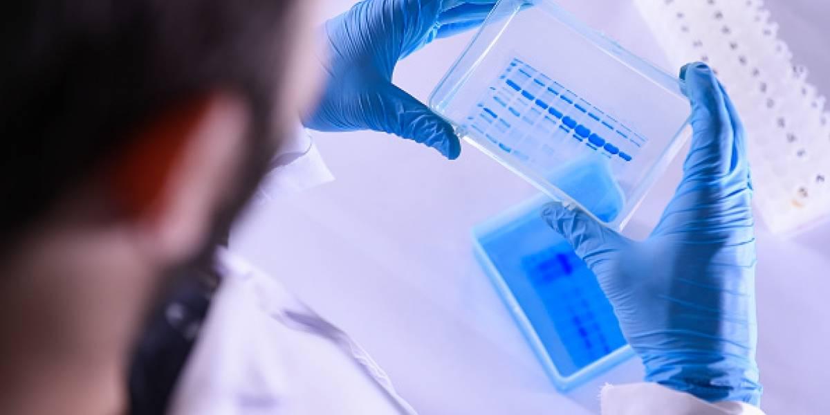 COVID-19 no ha mutado en diferentes tipos de virus, según un nuevo estudio