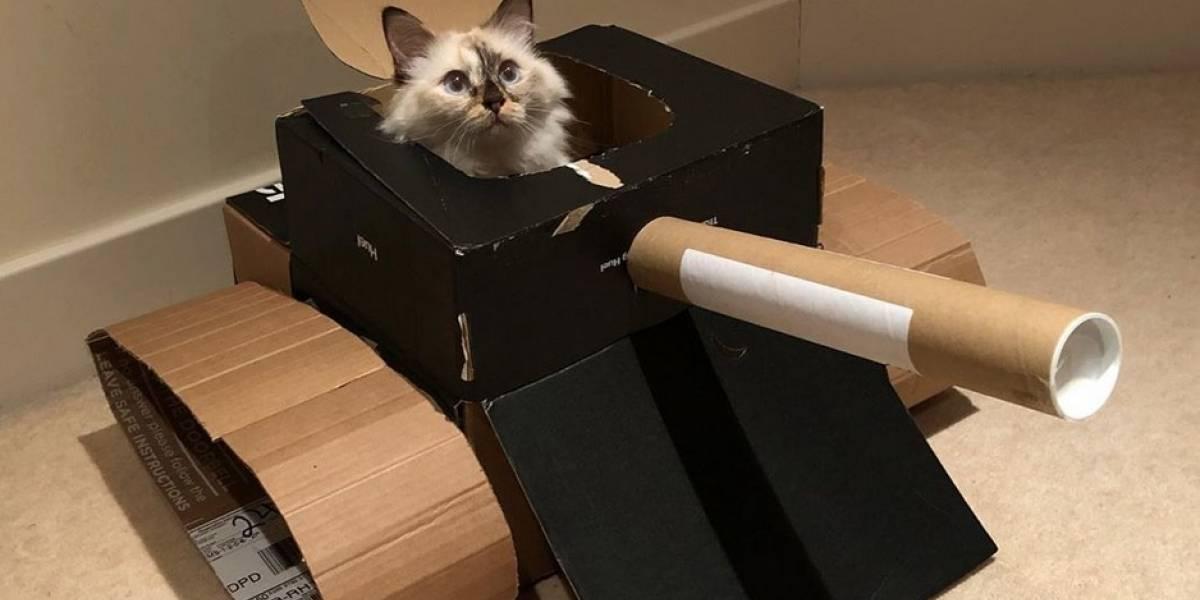 Dueños de gatos crean tanques para sus felinos