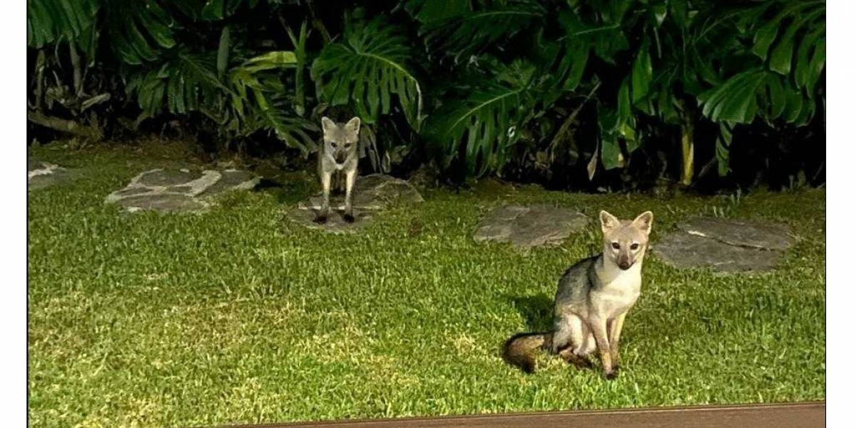 Los animales siguen disfrutando de la cuarentena, este es el nuevo avistamiento en la ciudad