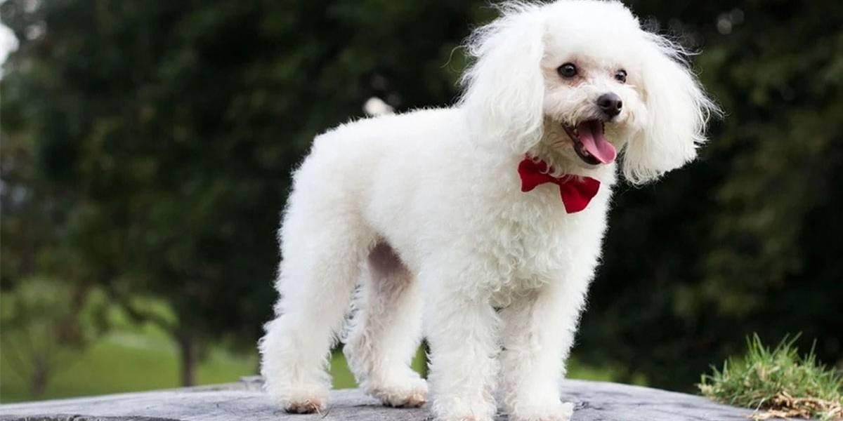 Justiça condena homem que matou cachorro a pagar multa de R$ 7 mil por danos morais