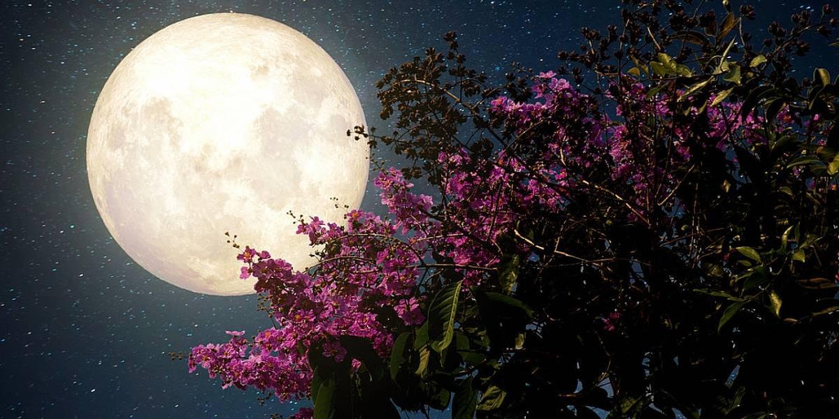 Super Luna de flores 2020: cómo sacar las mejores fotos para crecer tu cuenta de Instagram