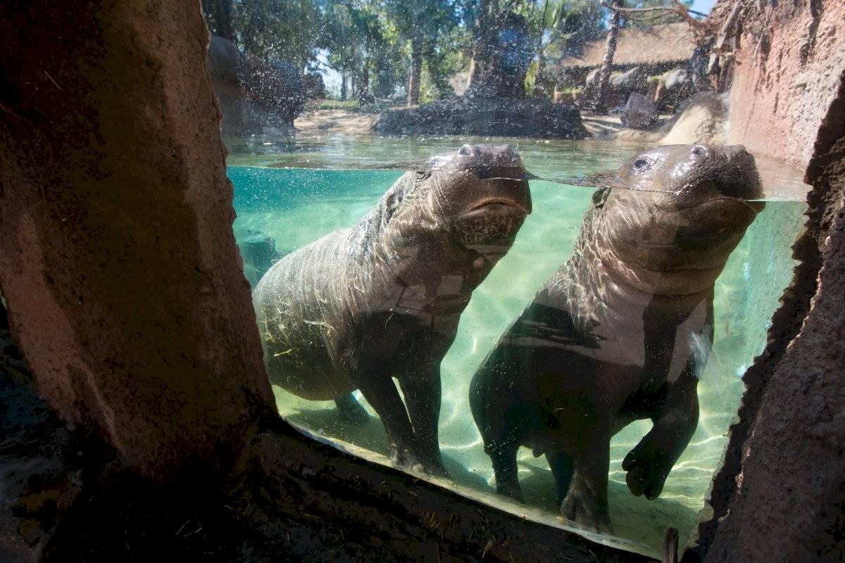Buin Zoo.