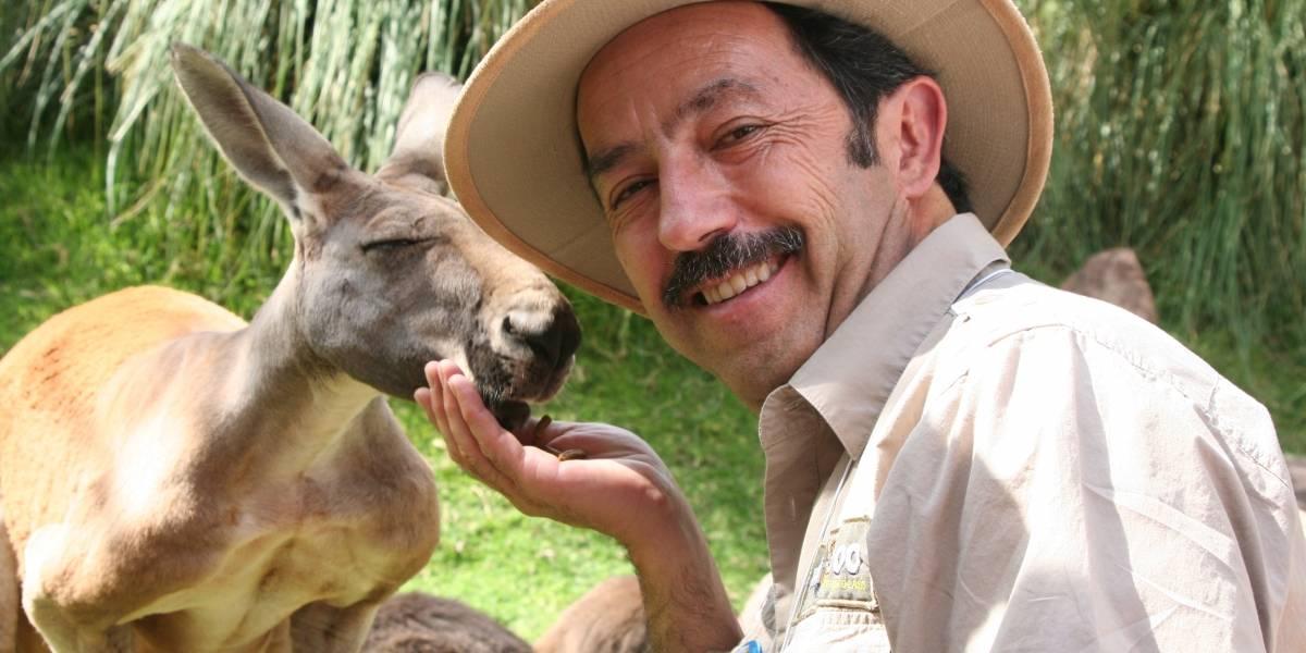 """Crisis financiera ante coronavirus afecta al Buin Zoo: """"No bajaremos la calidad del cuidado de nuestros animales"""""""