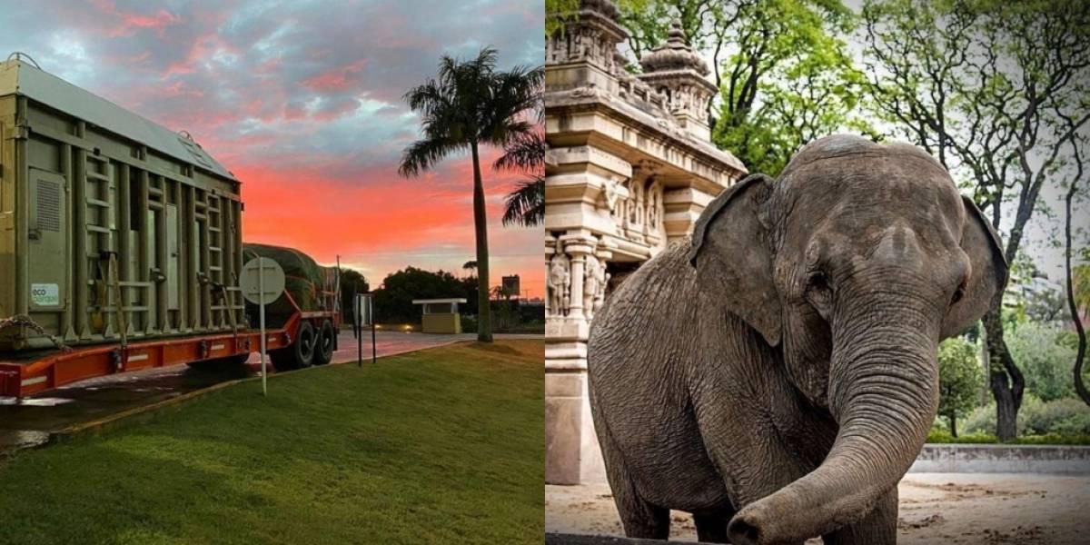 Após viagem de 2 mil km, elefanta de circo chega a santuário em Mato Grosso