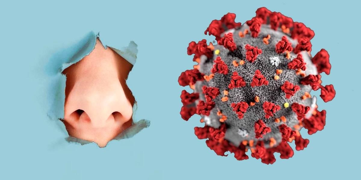Coronavirus: app valida la pérdida de olfato y gusto como síntomas recurrentes de Covid-19