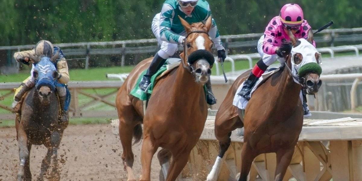 Alegan hipódromo condiciona reapertura carreras caballo a máquinas de juegos de azar