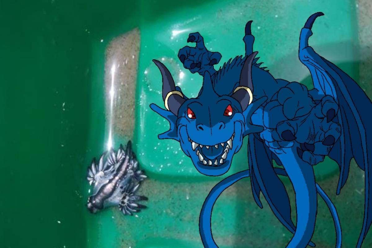 Dragones Azules: ¿cuál es la verdad detrás de estos misteriosos animales?