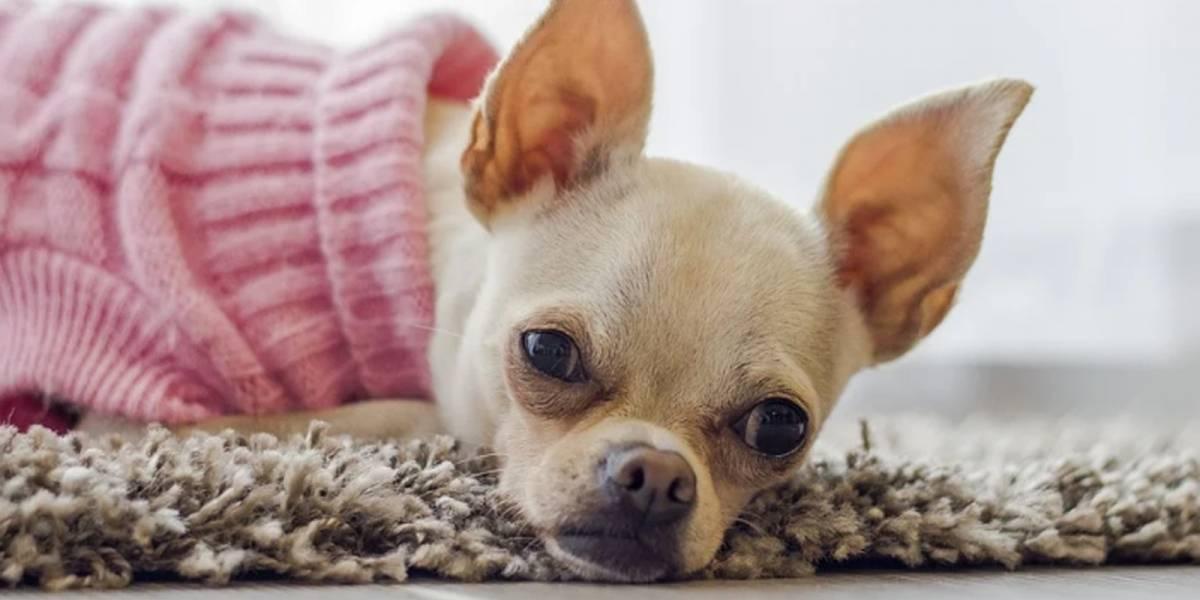 Ropa para perros: Una tendencia que tu mascota no puede perderse