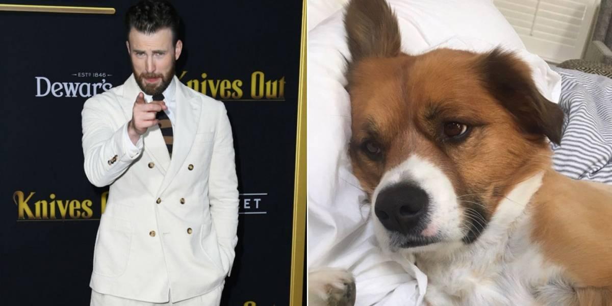 Chris Evans falha miseravelmente ao tentar tosar cachorro em casa