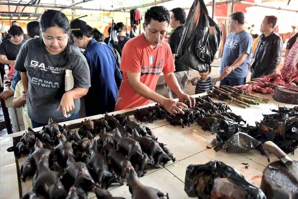 En Indonesia todavía se venden murciélagos desafiando al COVID-19