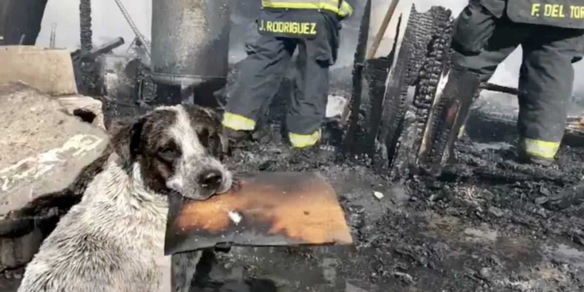 (Video) Perrito llora desconsolado al ver que un incendio consumió su hogar
