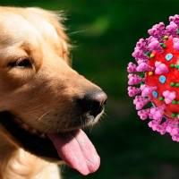 Coronavirus: Corea del Sur aplica pruebas de Covid-19 hasta a sus perros y gatos