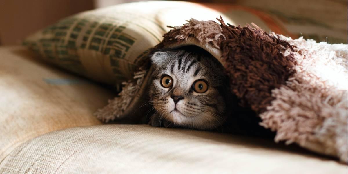 O truque eficiente para tirar pelo de gato e cachorro do tapete